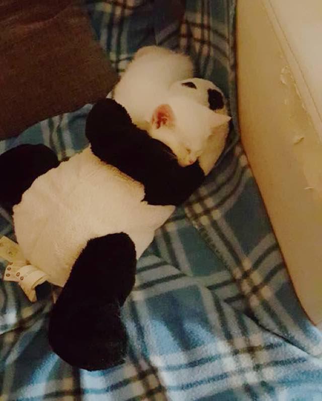 寝るときはいつもパンダのぬいぐるみといっしょ