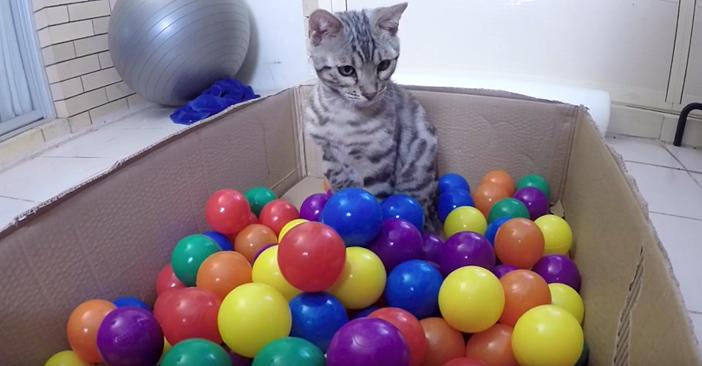ボールをもらった猫