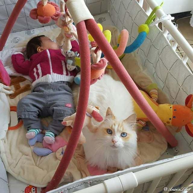 赤ちゃんと一緒の猫