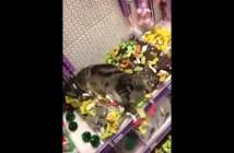 マタタビ猫