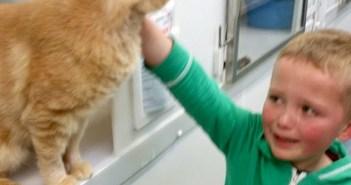 保護施設で猫と出会った少年