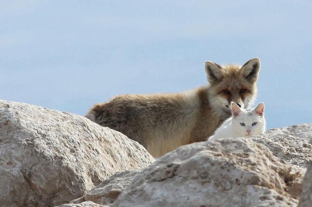 岩の間から覗くキツネと猫