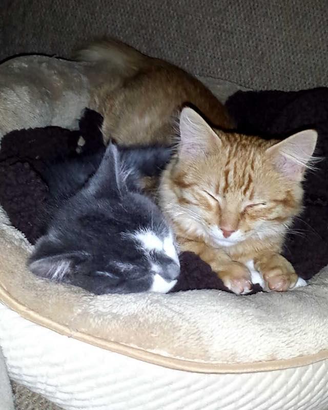 くつろぐ子猫と先住猫