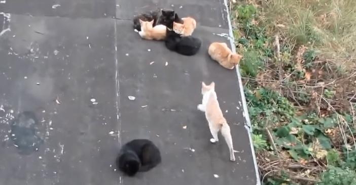 仲間に近づいて行く猫