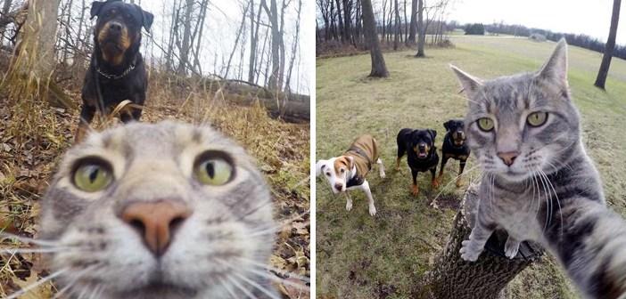 猫の自撮り写真