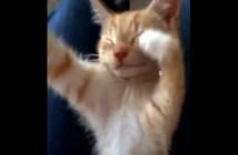 胸キュン子猫