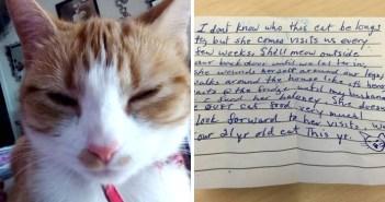 手紙を首輪に挟んで帰ってきた猫