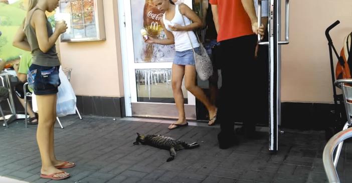 マクドナルドのドアの前で倒れている猫