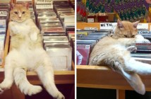 レコード店で働く猫