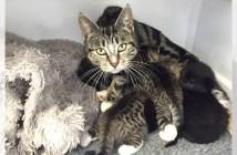 行方不明の子猫を探しにきた母猫