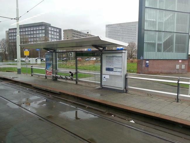 駅で待つ猫