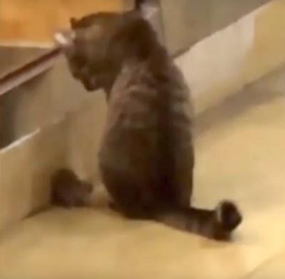 おこぼれを待つ猫とネズミ