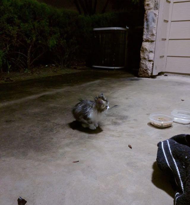 ガレージの子猫