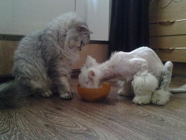 他の猫といっしょに食事