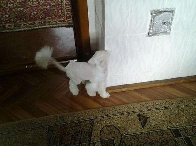 元気に歩き回れるようになった猫