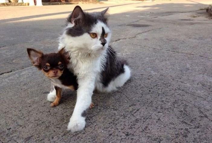 いっしょに暮らす犬と猫