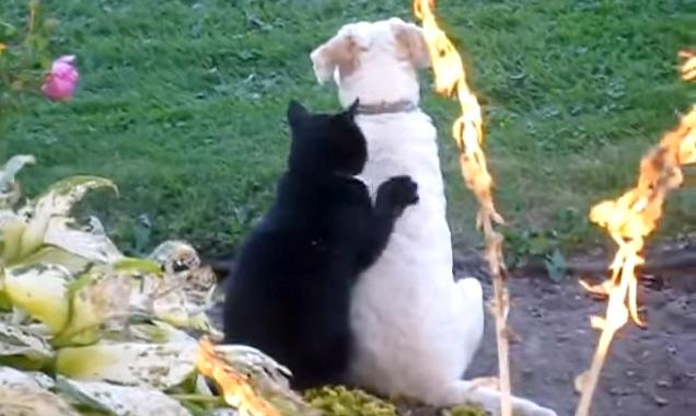 犬に寄り添う猫