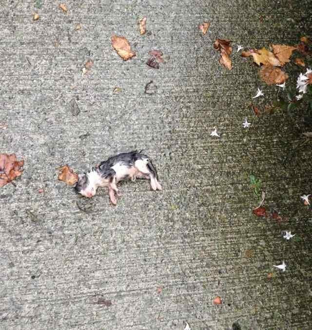 地面に横たわる子猫