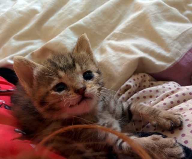 少しずつ元気になってきた子猫