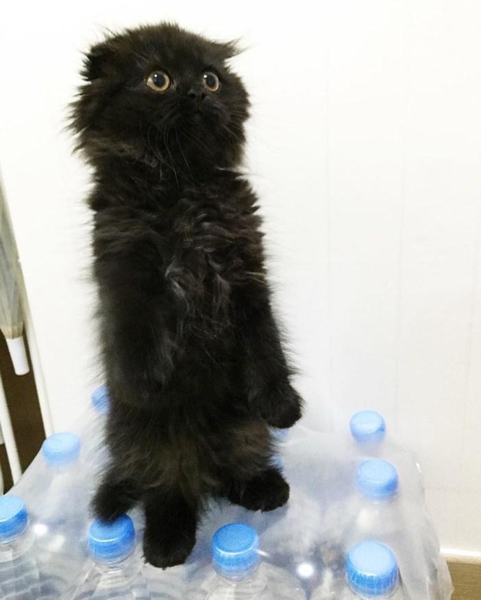 立ち上げる黒猫