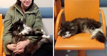 病院に通う猫
