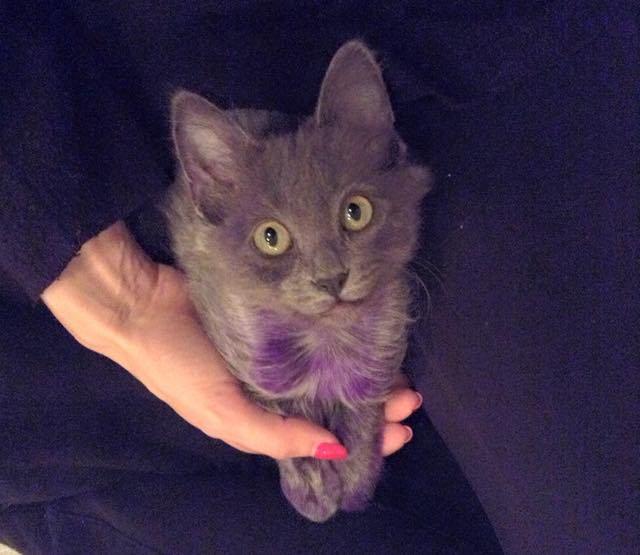 元気になった紫色の子猫