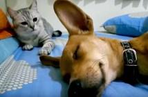 犬を起こす猫
