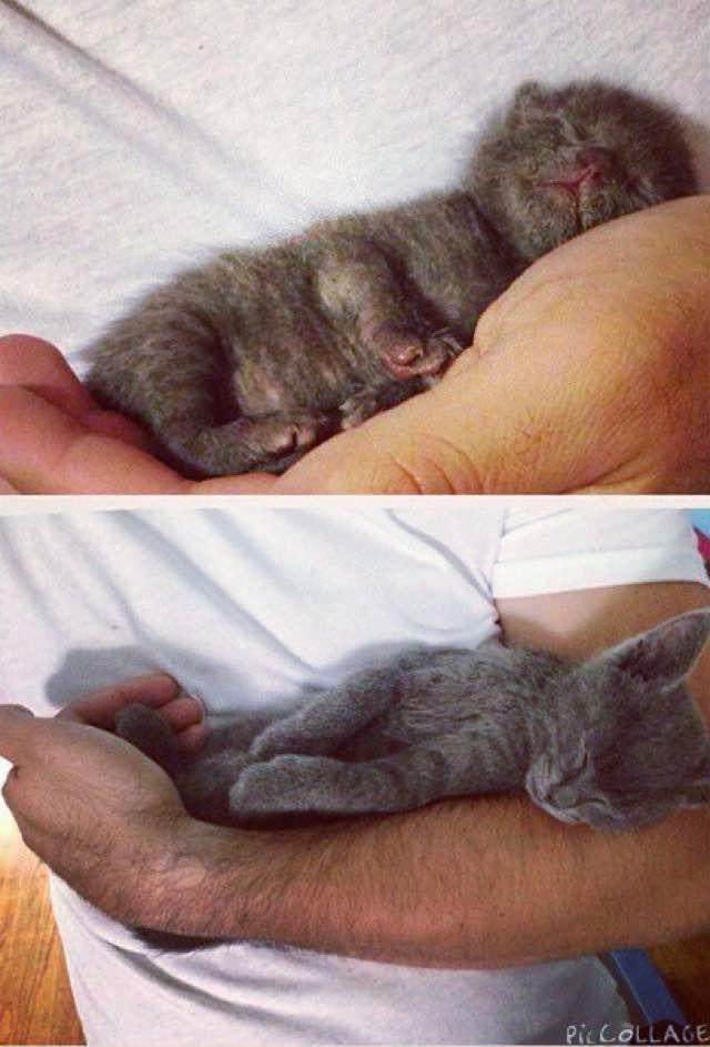 手の中で眠る子猫