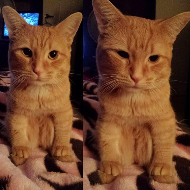 新しい座り方をする猫
