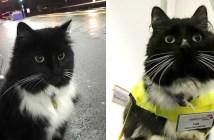 イギリスの駅猫