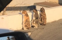 覗く3匹の猫