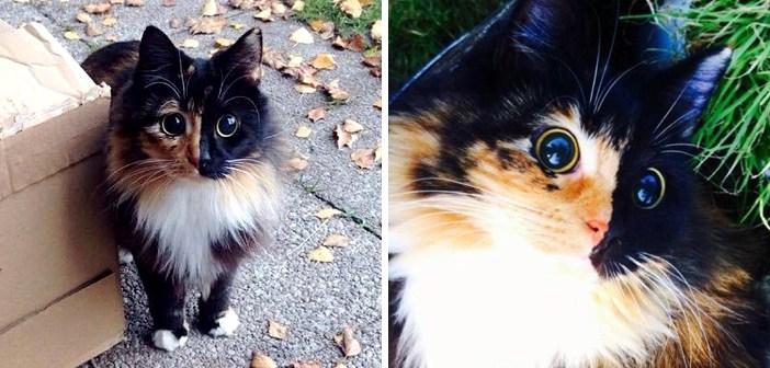 目の見えない猫