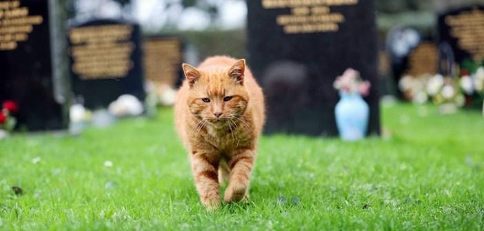 20年間墓地で暮らした猫