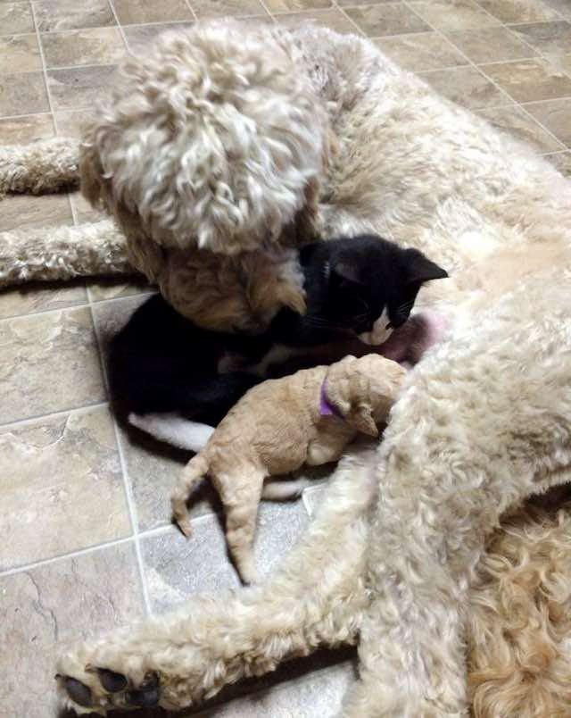 子犬と一緒の子猫