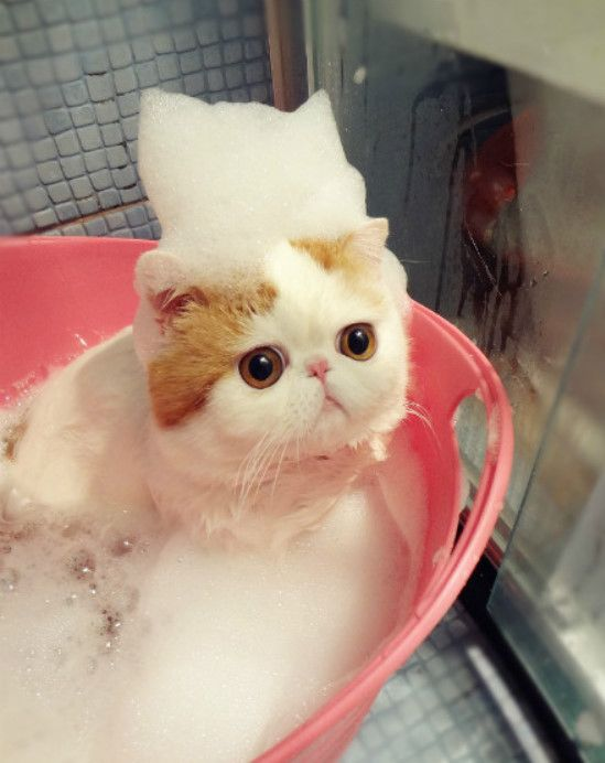泡を乗せた猫