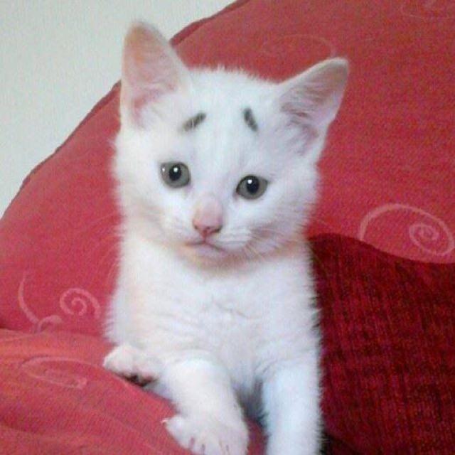 座る困り顔の猫