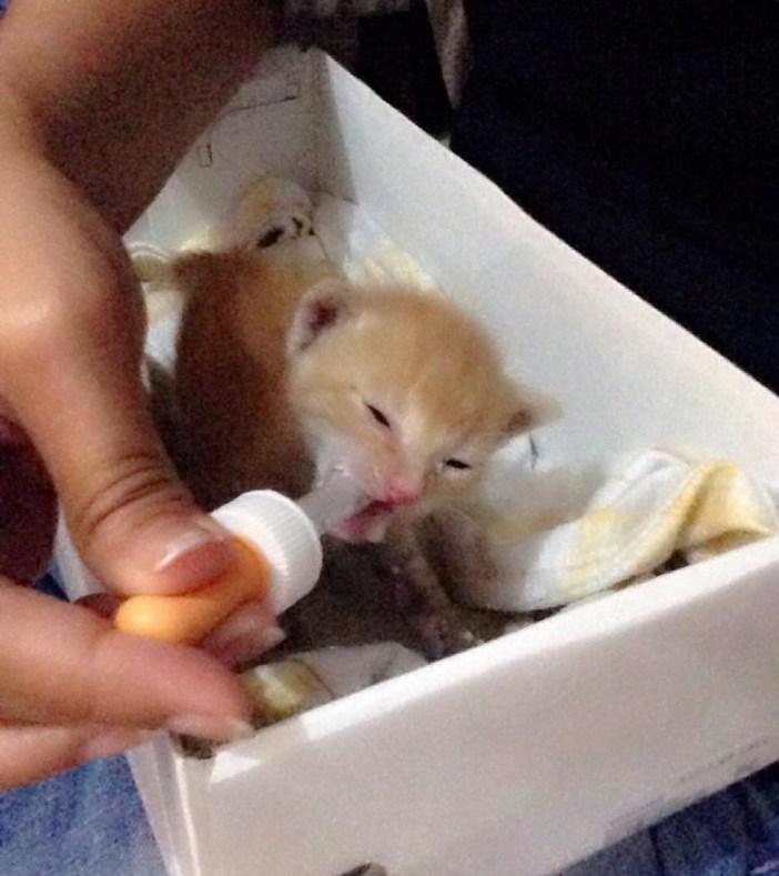 ミルクを飲ませてもらう子猫
