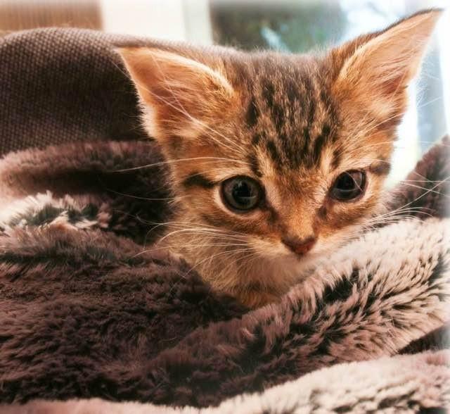 可愛い顔の子猫
