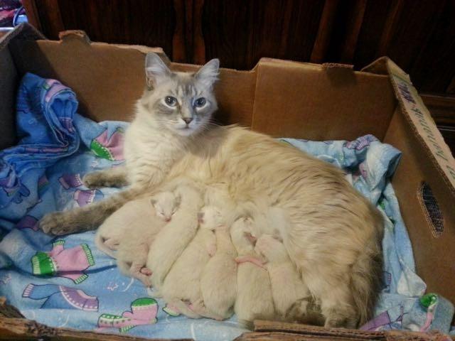 7匹の子猫と母猫