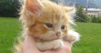 森で保護した子猫