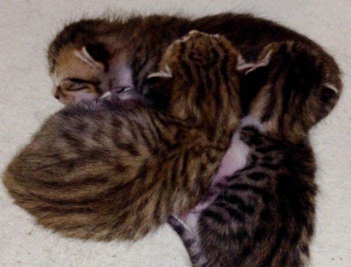 生まれた子猫