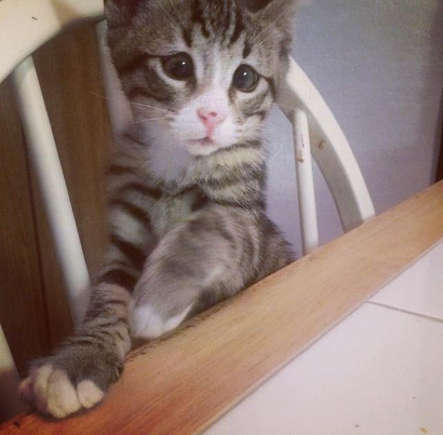 困ってる子猫
