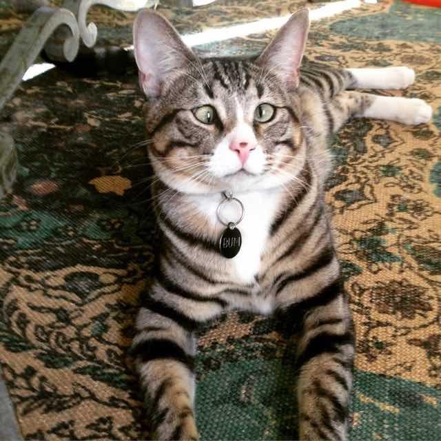 たくましくなった猫