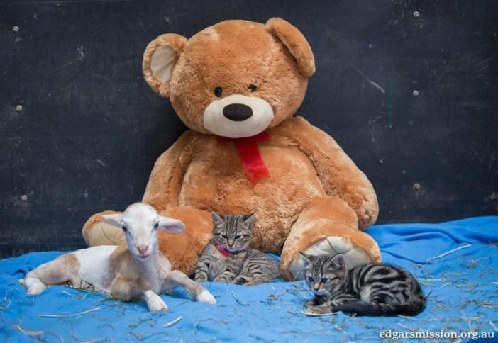 テディーベアと猫とヤギ