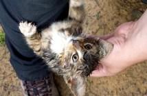 山道で足にしがみついてきた猫