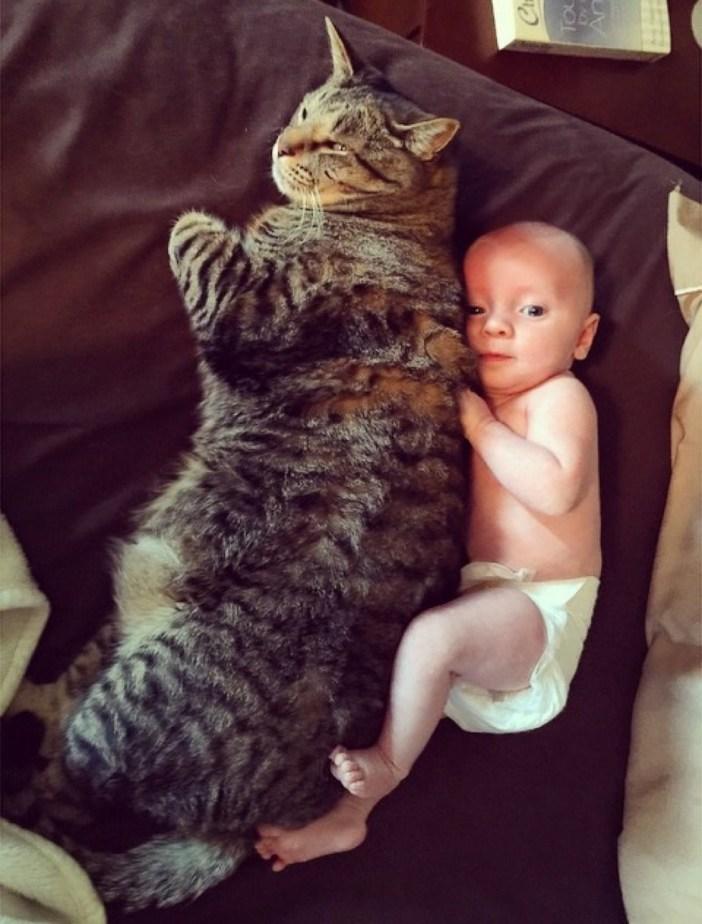 大きな猫と赤ちゃん