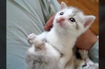 膝の上に乗せると安心する子猫