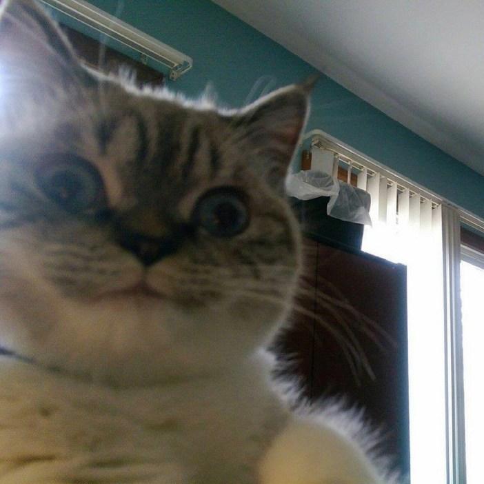 表情が特徴的な猫