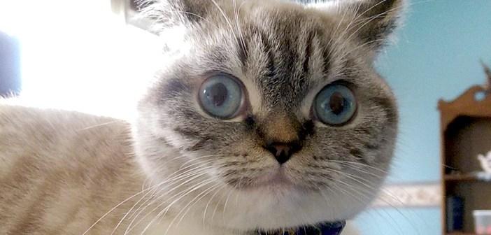 顔の面白い猫