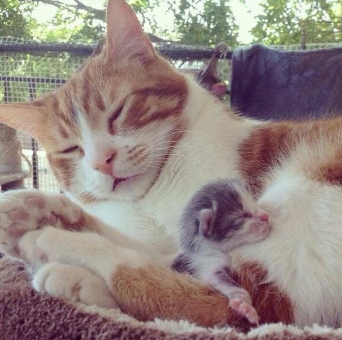 子猫を抱きしめる父猫